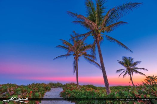 Delray-Beach-Coconut-Tree-and-Sky-Colors-at-Beach by CaptainKimo
