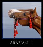 Arabian II by QueenOfGoldfishes