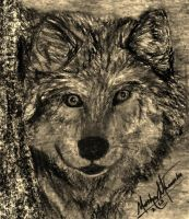 Charcoal Wolf Sketch by Graywolf95