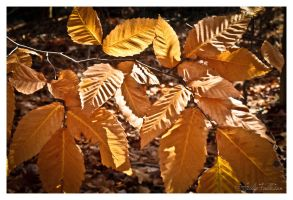 Autumn Foliage by FallesenPhotography