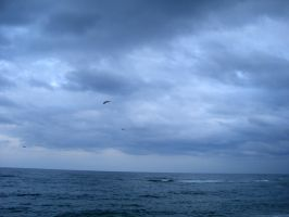 seagulls in a cloudy sky by wandaywang