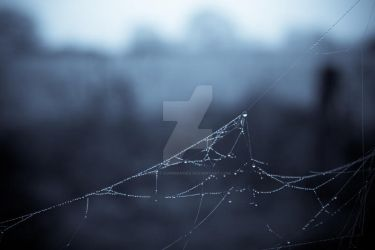 Spiders Web Macro Insect Photography by 13cat-commander