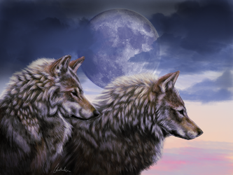 -:Evening Watchers:- by Colette-Anderson