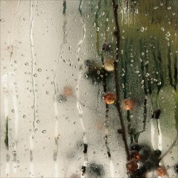 after|the|rain||| by m-lucia