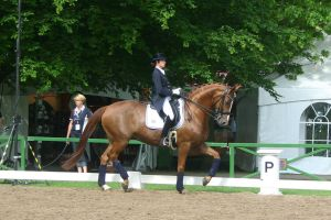 Dressage Trot Stock 03 by LuDa-Stock