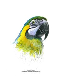 Blue, Green, and Yellow Macaw Parrot - Focus Art by SlotsArtStudio