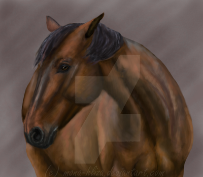 Portrait of horse by Mona-Hliza