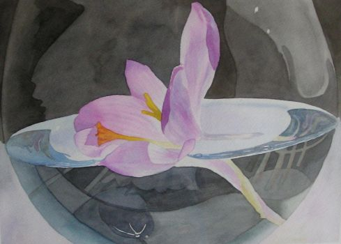 crocus in white wine by atheas