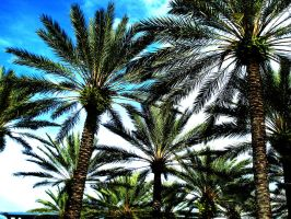 Universal Palm Trees by God-0f-Sushi