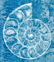 Spiral Ammonite Sketch - Exclusive Premade Stock by boldfrontiers