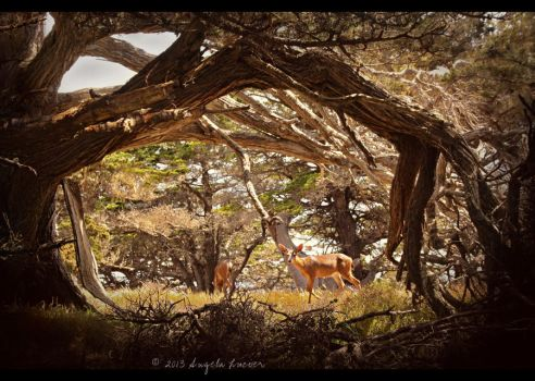 Upon the Trail by alucier