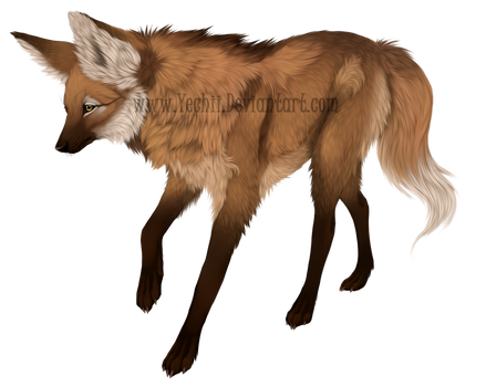 Maned wolf + Speedpaint by Yechii