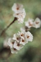 Transparency - Against winter-depression by C-Asepsis