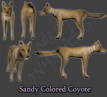 Sandy Coyote by Onyxoasis