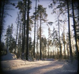Siberian forest by sysyphus21