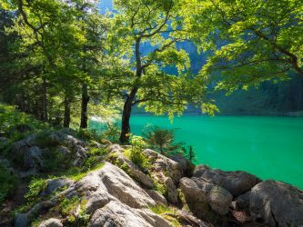 Among the trees at Seealpsee by orestART