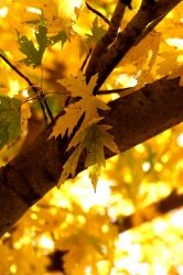 Fall in the Tree by shutter-bug664