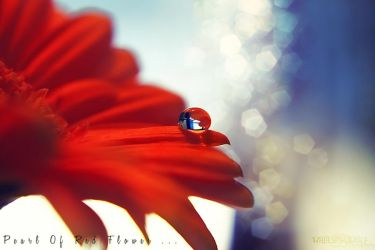 .:PEARL OF RED FLOWER:. by WhiteSpiritWolf