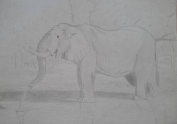 elephant sketch by luginsculpture47
