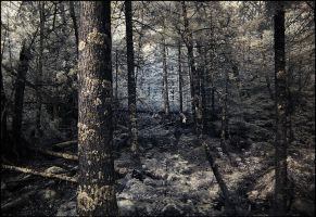 infrared forest study by BrianWolfe