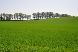 Green Fields by TheMetronomad