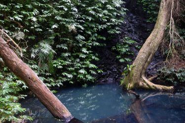 Rainforest pool 1 - Bunya Mountains by wildplaces