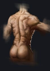 Back Muscles Study by Ink-Mug