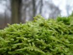 moss bed by MissManic7910