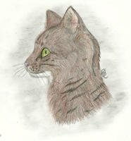 -Realistic Cat- by Jersey-Cat