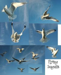 Birds In Flight by Jenifer10