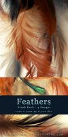 Feathers - Stock Pack by kuschelirmel-stock