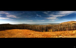 Yellow Stone National Park by churner
