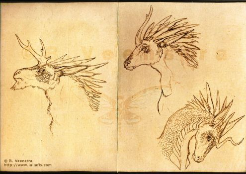 Concept: Regali Head Studies by xdragonflyx