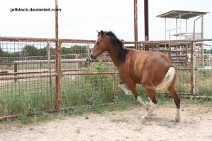 bay APHA 21 by jettstock