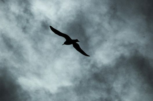 North Sea Gull by Orion--13