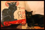 Deux Beaux Chats Noirs by TeaPhotography