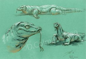 Komodo Dragon Studies LA Zoo by davidsdoodles