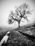 Cheshire Winter by OliverWoodPhoto