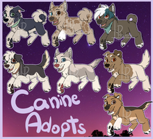 Canine Adoptables - OPEN by P4ndora-L