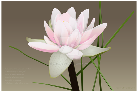 A Lily by any other name by Mirabel