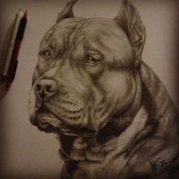 American Staffordshire: Finished by RedEyedDemon
