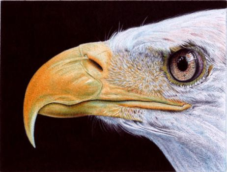 Bald Eagle - Ballpoint Pen by VianaArts