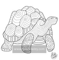 Galapagos Tortoise (The Exotic Colouring Book) by megcowley