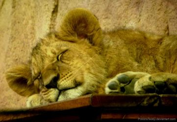 Dreamy little lion by PotionsTeddy