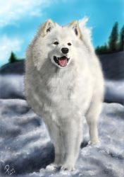 samoyed drawing by bubumo