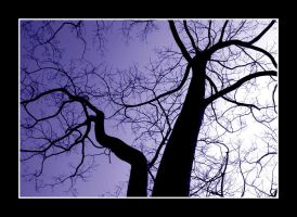 leafless life by chinlop