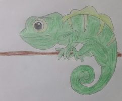 Chameleon Drawing by jcpag2010