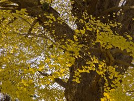 This Old Tree III by larksgar