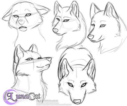 Practice wolf heads again by FlyingPony