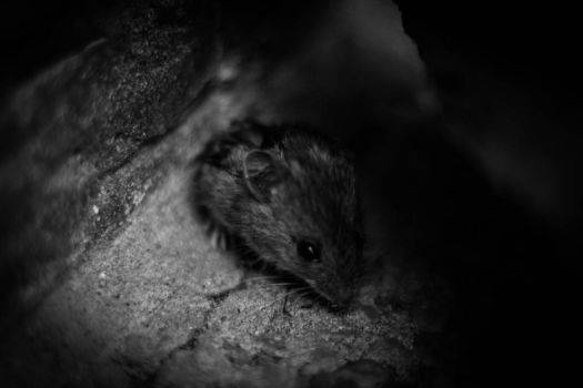 Mouse by LukaStevens